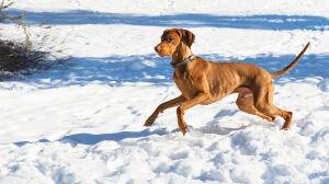 Rada Warszawy uchwaliła nowe zasady wyprowadzania psów