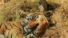 Jadgeep Rajput/Comedy Wildlife Photo Awards 2020