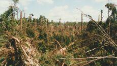 Co po największej powojennej klęsce polskich lasów?