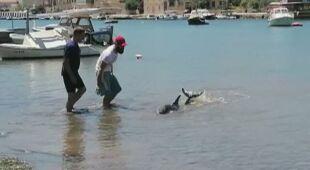 Delfin utknął w płytkiej wodzie